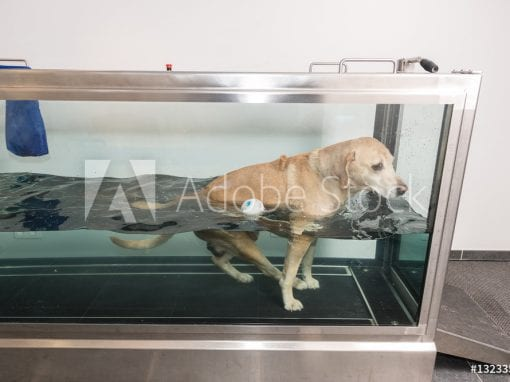 Canine Aqua and Hydrotherapy